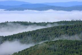 內蒙古大興安嶺森林碳儲總量約17.2億噸
